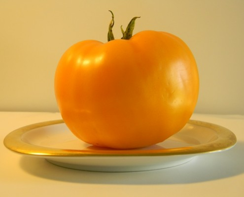 Yellow Tomato from successful garden Barry Sahagian
